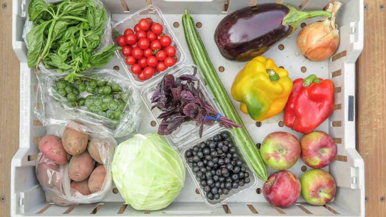 CSA share box of fresh vegetables.